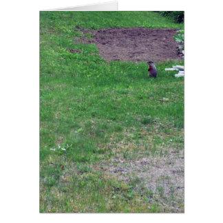 Carte jour-Vide de Groundhog-Groundhog
