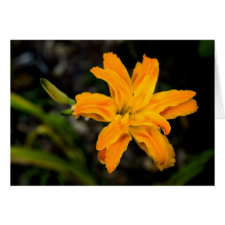 Carte Kwansa a hérissé le double daylily orange