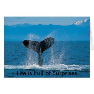Carte La baleine de bosse, la vie est pleine des