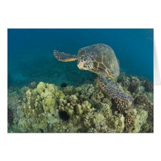 Carte La tortue de mer verte, (des mydas de Chelonia),