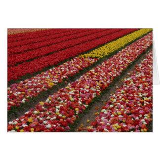 Carte La tulipe met en place la Hollande