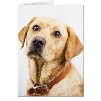 Carte Labrador