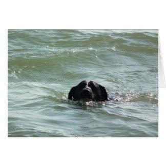 Carte Labrador dans le bain