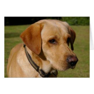 Carte Labrador d'or