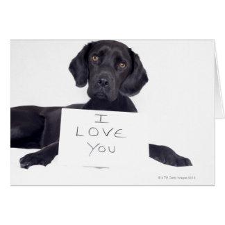 Carte Labrador noir 13 mois