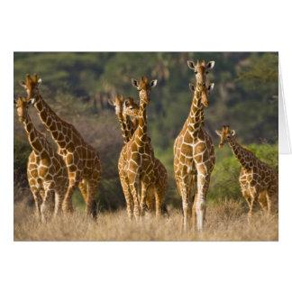 Carte L'Afrique. Le Kenya. Troupeau de girafes