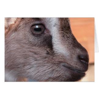 Carte Lapin la chèvre