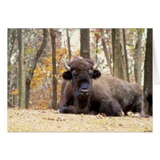 Carte Le bison américain dans l'automne colore la photo