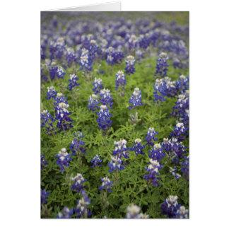 Carte Le Bluebonnet de Texas