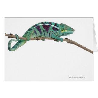 Carte Le caméléon de panthère fouineur soit (les