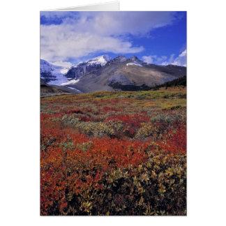 Carte Le Canada, Alberta, Banff NP. Les airelles