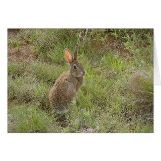 Carte Le lapin regarde au-dessus de l'épaule