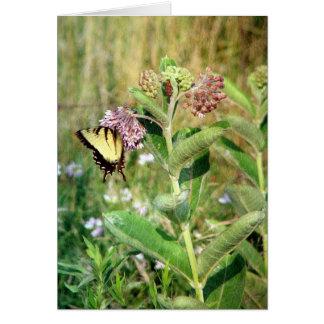 Carte Le papillon et le Milkweed