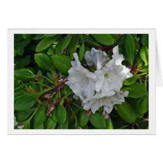 Carte Le rhododendron fleurit # 5