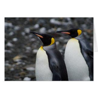 Carte Le Roi pingouins