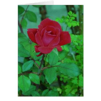Carte Le rose rouge de Lynn de xérès