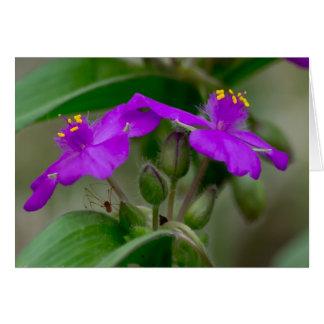 Carte Le Spiderwort fuchsia jumelle l'habillement de