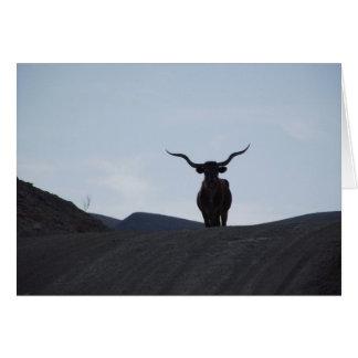 Carte Le Texas Longhorn