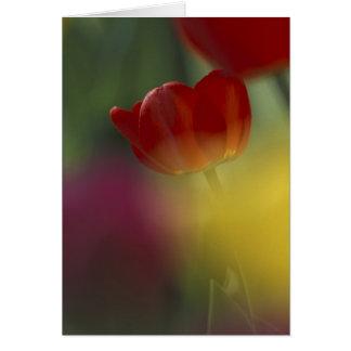 Carte Les Etats-Unis, Utah, tulipes de vallée de