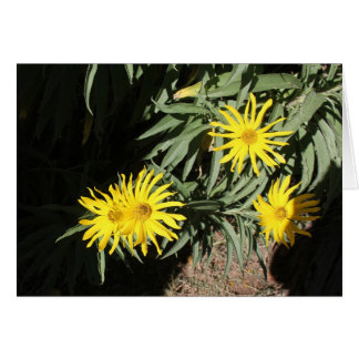 """Carte Les hierbas d'en MI de Flores """"fleurit dans mes"""