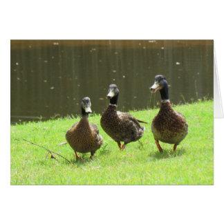 Carte Les trois canards sages