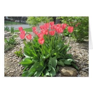 Carte Les tulipes obtiennent bien vite