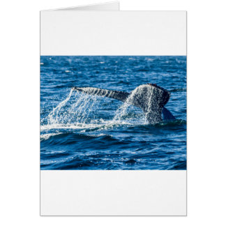 Carte L'état de Washington de baleine de bosse