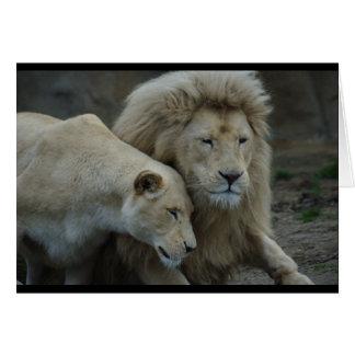 Carte Lions blancs