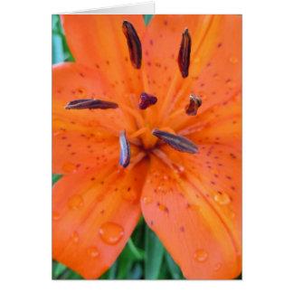 Carte Lis orange avec des gouttelettes d'eau