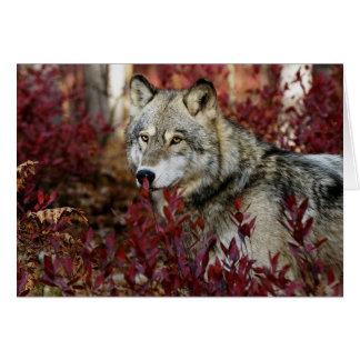 Carte Loup dans le feuillage rouge