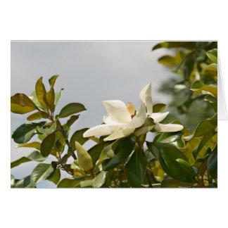 Carte Magnolia de Macon, Mississippi