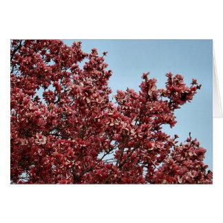 Carte Magnolia japonaise