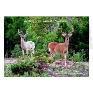 Carte mâles de ~Two sur Rogers Mountain~