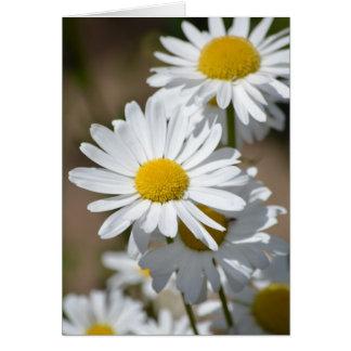 Carte Marguerites au printemps