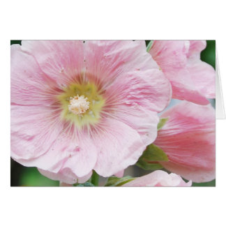 Carte mauve rose