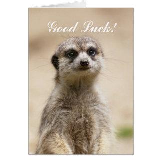 Carte Meerkat