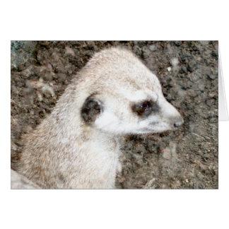 Carte Meerkat #4