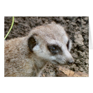 Carte Meerkat #5
