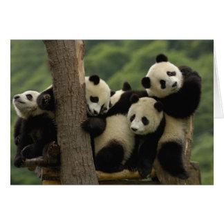 Carte Melanoleuca d'Ailuropoda de bébés de panda géant)