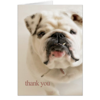 Carte Merci blanc loyal de bouledogue