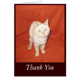 Carte Merci de chat
