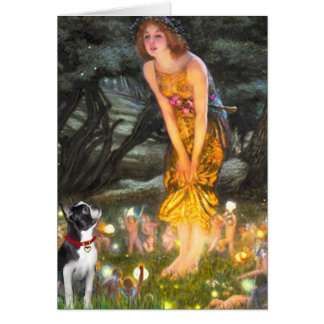 Carte MidEve - Boston Terrier #2