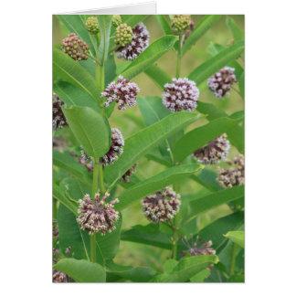 Carte Milkweed commun