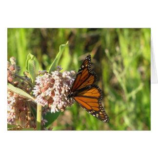Carte Monarque sur le milkweed