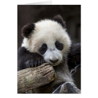 Carte Montée de panda de bébé un arbre