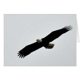 Carte Montée d'Eagle chauve