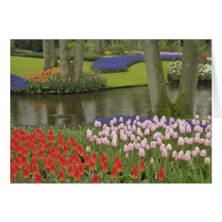 Carte Motif des tulipes et des fleurs de jacinthe de