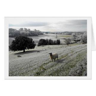 Carte Moutons dans une vallée givrée