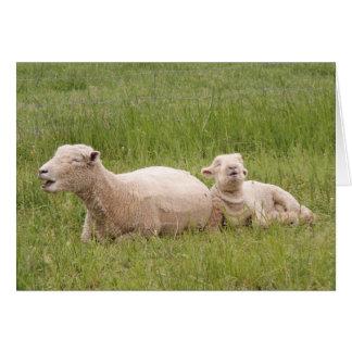 Carte Moutons de chant