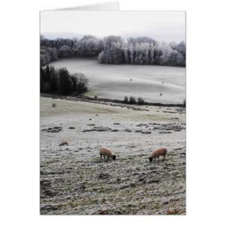 Carte Moutons frôlant un matin givré